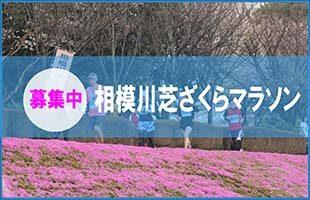 相模川芝ざくらまつりマラソン